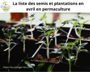 Quoi semer et planter au mois d'avril en permaculture